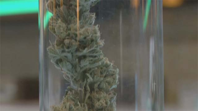 Marijuana appears in this file image. (Source: File/FOX5)