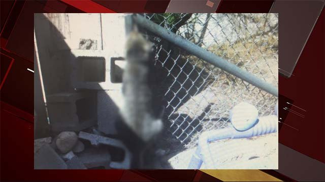 A cat was recently discovered hanged from a fence in Las Vegas. (Source: Nevada Voters for Animals)