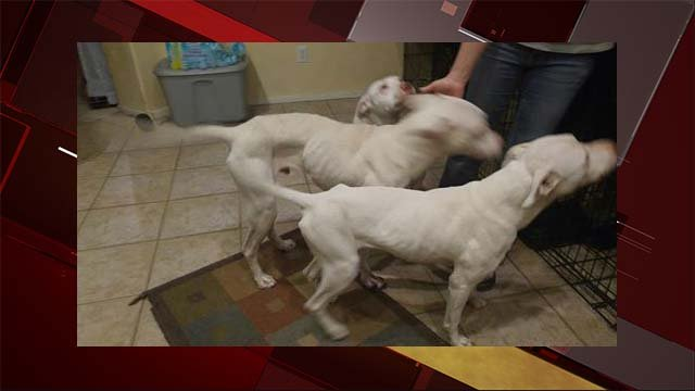 18 malnourished dogs removed from south las vegas home for Las vegas home source