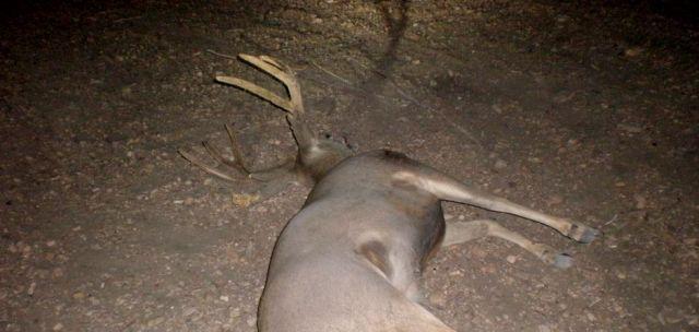 (Photo: Nevada Department of Wildlife)