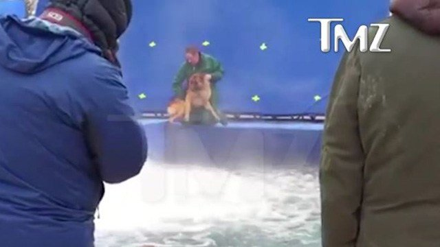 """A video captured an animal wrangler handling a German shepherd over water during the filming of """"A Dog's Purpose."""" (Source: TMZ.com)"""