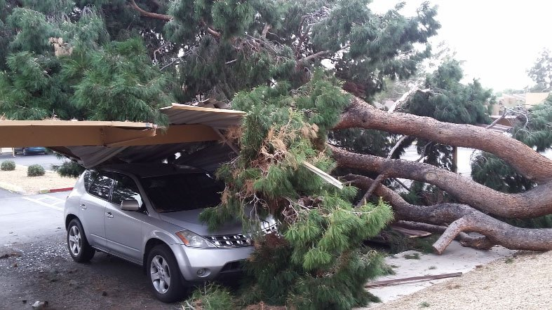 A tree fell on a parked car after a wind storm in Southern Nevada on March 30, 2017. (Robert Vinson/Report It)