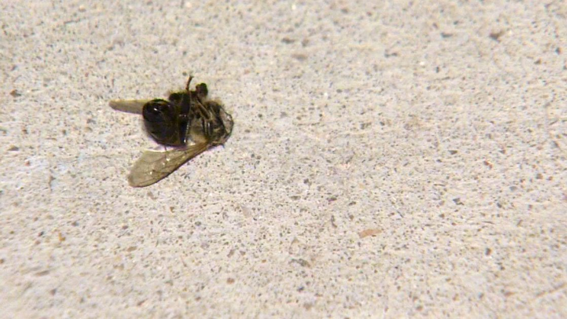 Two people were hospitalized and a dog was killed in a bee attack on April 7, 2017. (Roger Bryner/FOX5)