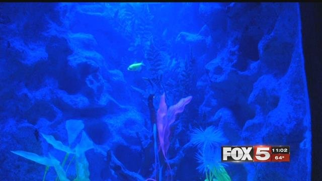 Fish pictured inside SeaQuest in this undated photo. (File/FOX5)