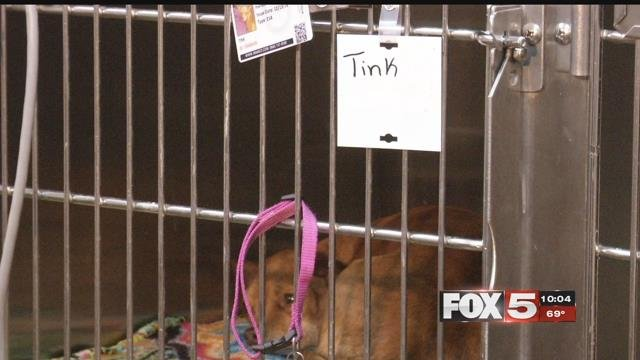 A poisoned dog sits in a cage unable to eat or drink (Kathleen Jacob/FOX5).