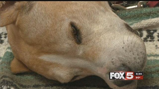 A family said they believe their dog was poisoned in Pahrump. (FOX5)