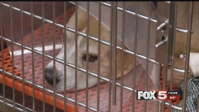 A Pahrump dog was poisoned this week. (FOX5)