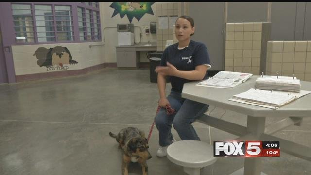 A Las Vegas women's prison partnered dogs and inmates to help each other. (FOX5)