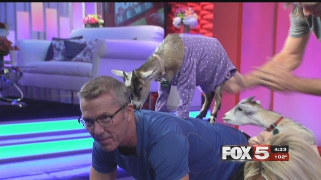 Goat Yoga made its way to FOX5 studio Tuesday. (FOX5)