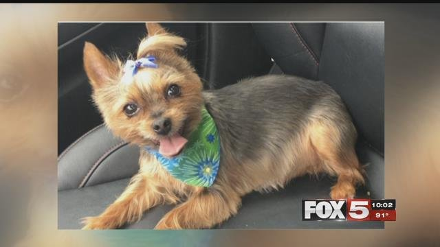 A valley woman's car was stolen with her dog inside.