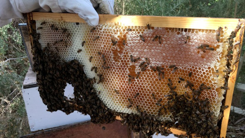 A bee colony in Logandale on Aug. 4, 2017. (Peter Dawson/FOX5)