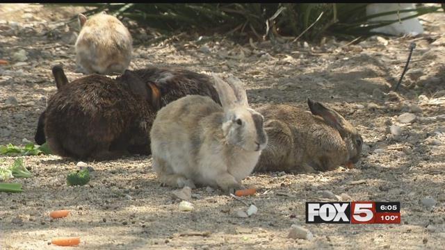 Bunnies graze in a popular dumping site (FOX5).