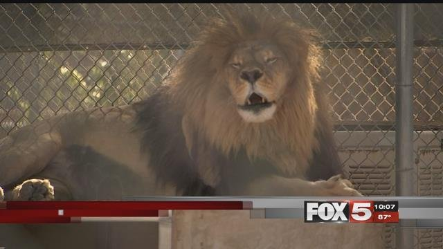 Storms flooded the Lion Habitat Ranch. (FOX5)