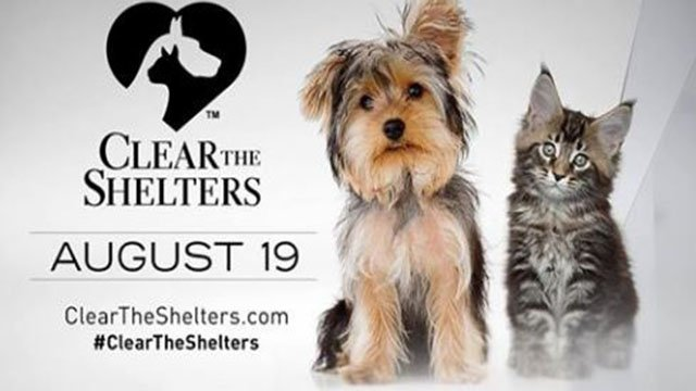 Clear the Shelter event being held at the Animal Foundation on Aug. 19, 2017. (Animal Foundation/Facebook)