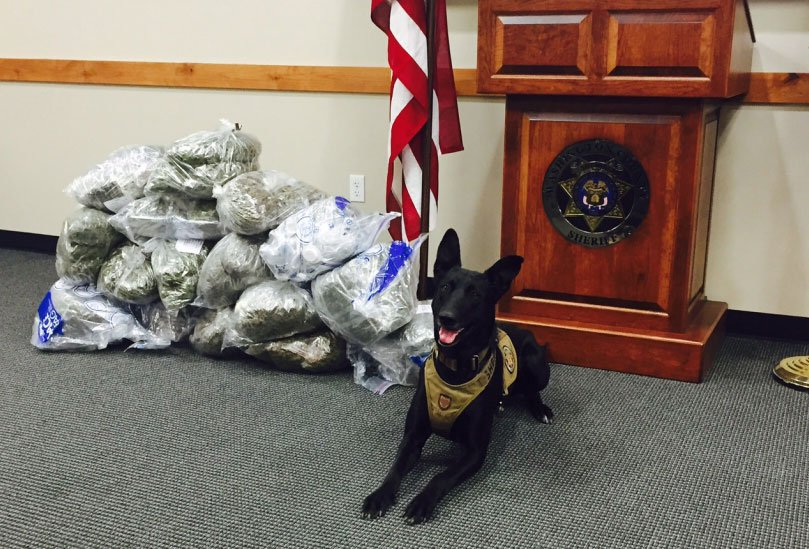 7-year-old K9 Tess is shown in an undated image. (Source: WCSO)