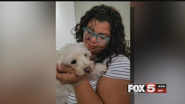 Dog and owner reunited in Henderson after four years and thousands of miles apart.