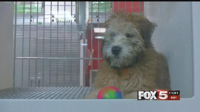 Las Vegas repealed a ban on pet sales at shops. (FOX5)