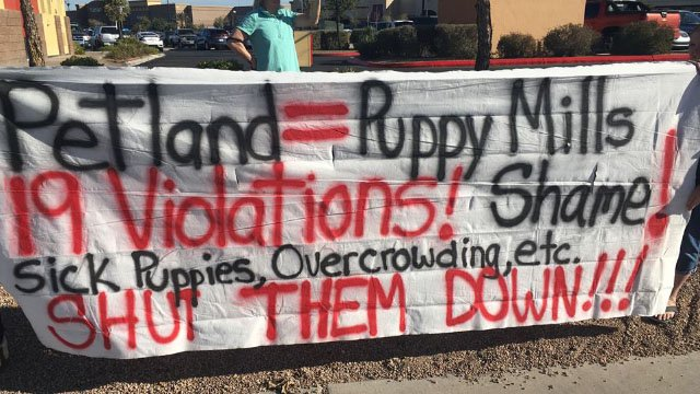 Nevada animal activists protest Petland of Henderson on Dec. 2, 2017. (Kurt Rempe/FOX5)