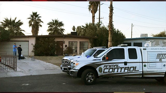 Las Vegas city officials remove 50 cats from a home in the northeast area. Jan. 12, 2018 (Photo: Eric HIlt/ FOX5)