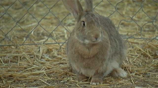 An undated image of a rabbit (FOX5).