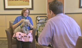 Sue Grundfest trains dogs for animal-assisted therapy
