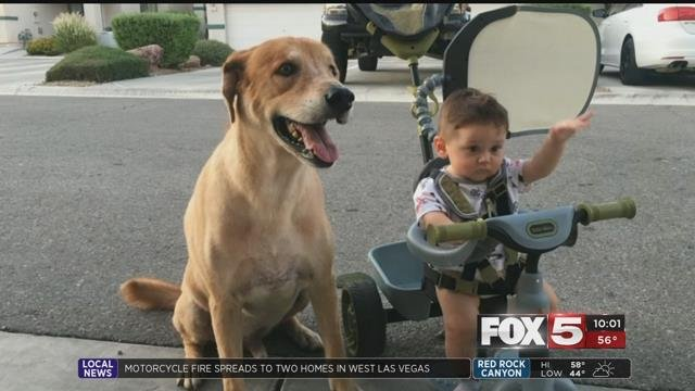 A Metro officer has been under investigation for shooting and killing a pet golden retriever.