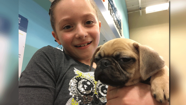 A girl was gifted a pug mix as part of the Make A Wish Foundation. (Jason Westerhaus/FOX5)