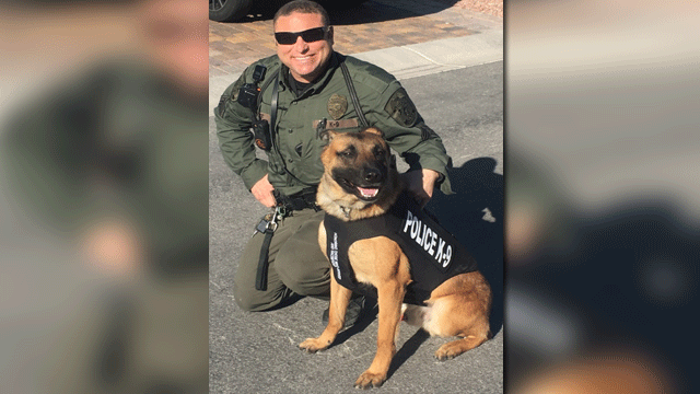 North Las Vegas police K9 Storm received a bullet proof and stab protective vest. (Source: NLVPD)