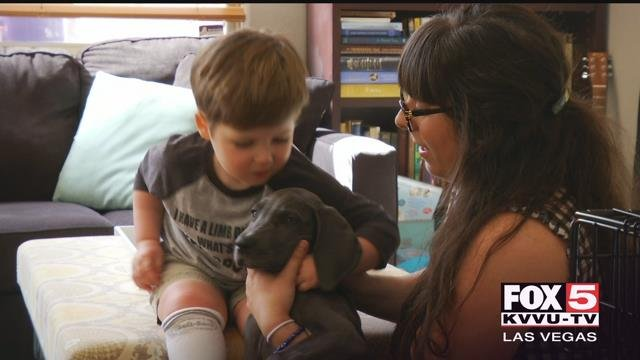 A valley boy and his new pet dog share a special bond. (FOX5)