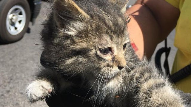 A kitten was rescued by two LVMPD bike officers Friday afternoon. (Photo: Nevada Highway Patrol)