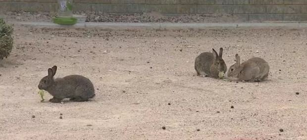 A group of bunnies walk through the mental facility before being rescued (FOX5).