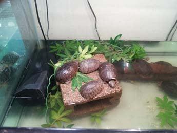 Exotic Pets on Decatur and Smoke Ranch doesn't sell baby turtles, which is illegal. (Elizabeth Watts/FOX5)