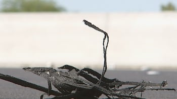 A piece of tire debris lies on the shoulder of I-15