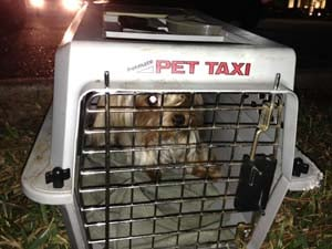 One of the rescued Yorkies. (Courtesy of KHOU-TV)