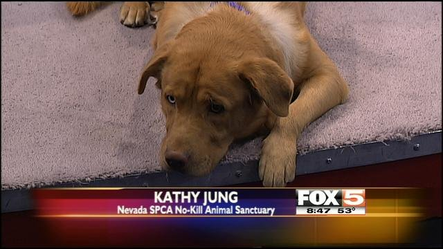 Watson appeared on FOX5 as this week's Pet Pal.