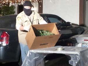 About 70 marijuana plants were taken from the home. (Matt DeLucia/FOX5)