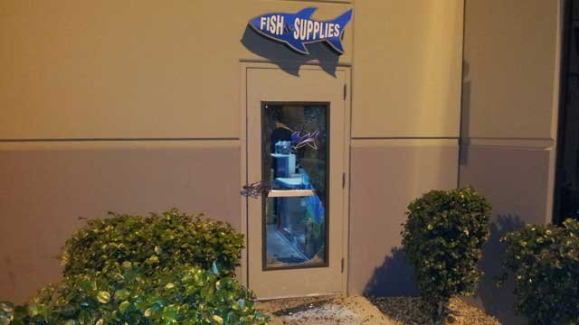 Acrylic Tank Manufacturing co-owner Wayde King said a rock was used to smash into a glass door before the theft of four birds. (Peter Dawson/FOX5)