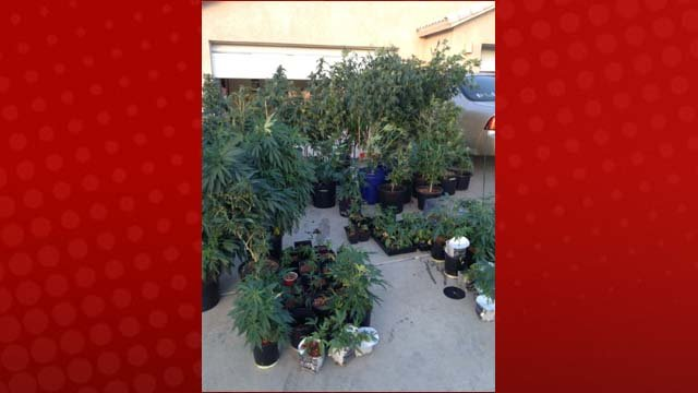Another photo from Wednesday's bust. (Bullhead City Police Dept.)