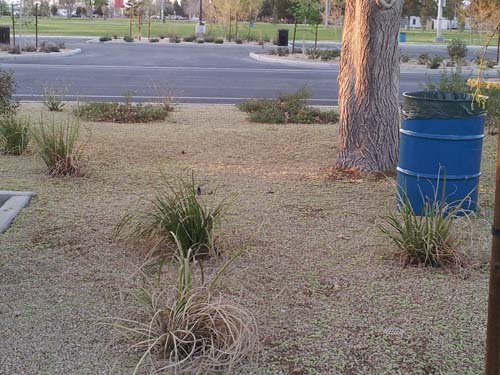 Spring is allergy season for many in the Las Vegas Valley. (Elizabeth Watts/FOX5)