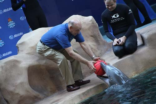 An even more adorable picture of the dolphin. (Taylor)