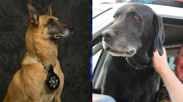2 Metro police dogs die within days of each other
