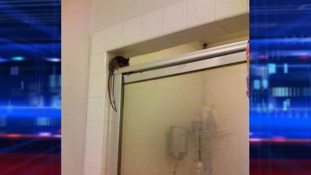 Linden Peterson was greeted by this rat in her Las Vegas home. (Linden Peterson)