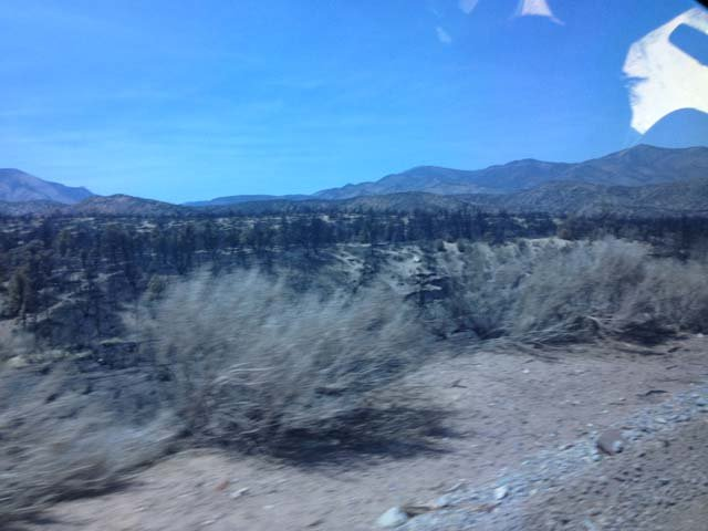 A tour on Thursday revealed scorched earth on Mount Charleston. (Les Krifaton/FOX5)