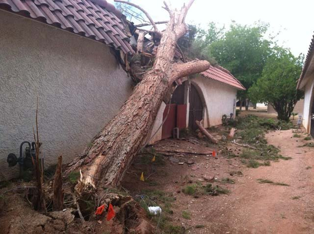 An uprooted tree indicative of the damage at the Atrium Gardens condo complex. (Azenith Smith/FOX5)