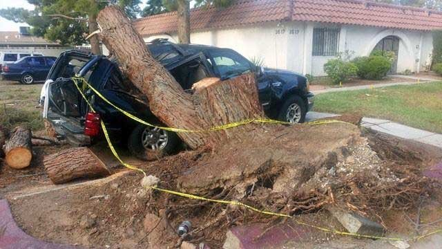 High winds from a storm on July 19, 2013, toppled this tree onto a vehicle at the Atrium Gardens neighborhood. (Dave Lawrence/FOX5)