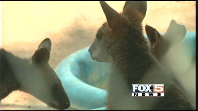 Some of the animals spotted on Tuesday when FOX5 visited the closed Southern Nevada Zoo. (FOX5)