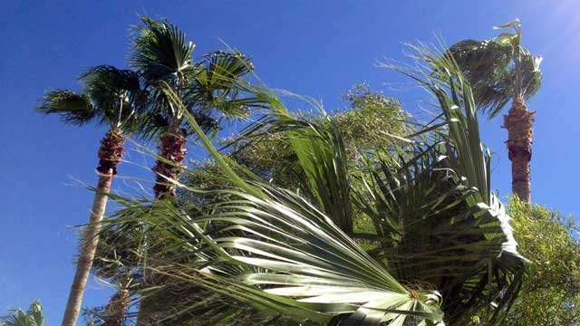 Palm trees blow in the wind outside a Henderson business in this undated image. (File/FOX5)