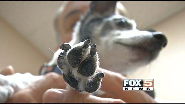 Hypothermia can set in in small dogs such as Joey, pictured, in 10 to 15 minutes. (FOX5)