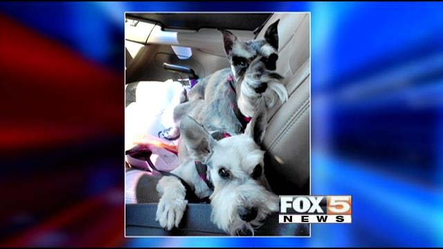 The Diehl family's missing Miniature Schnauzers, Stella and Domino. (Source: Diehl family)
