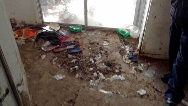Children 22 Dogs Found Living In Filthy Conditions In Az